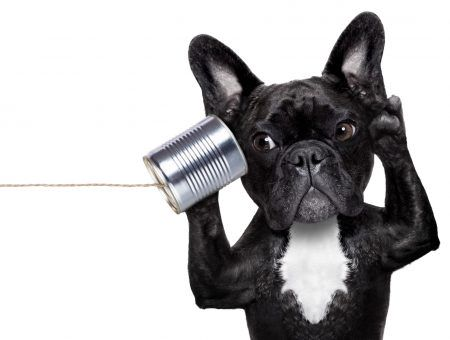How to talk to a smart speaker? Just like to a puppy dog!