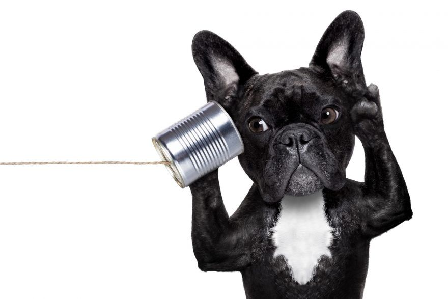 Funny picture of a dog that is listening to a can telephone